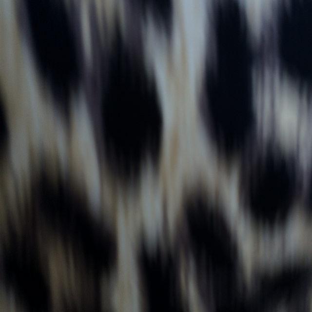 leopard-ddress