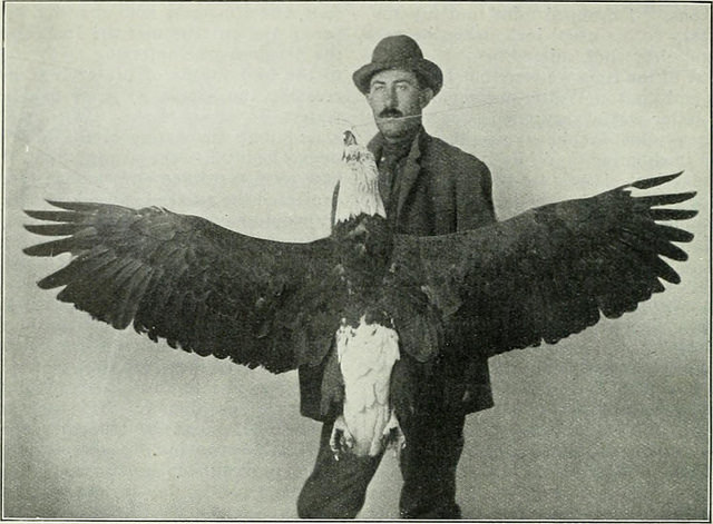 antique-eagle-rodandgun-1898