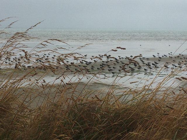 Windswept tidal flat, Golden Bay, New Zealand