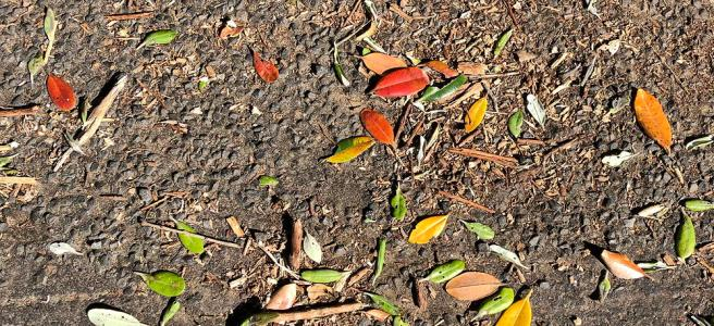 Red, yellow, green and brown leaves under a pohutukawa tree