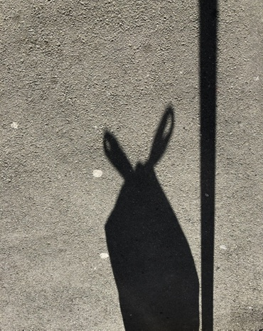 Shadow of a creature like a hare beside a pole