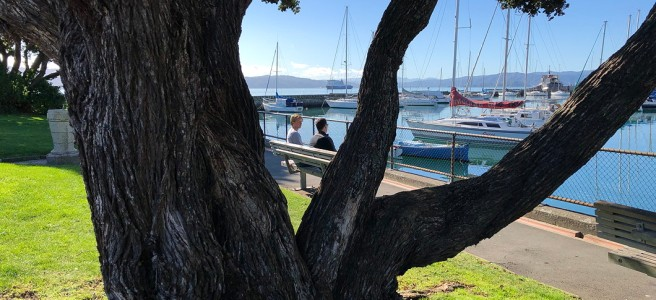 Big pohutukawa tree in front of a still blue harbour, yachts, and two humans talking in the sun